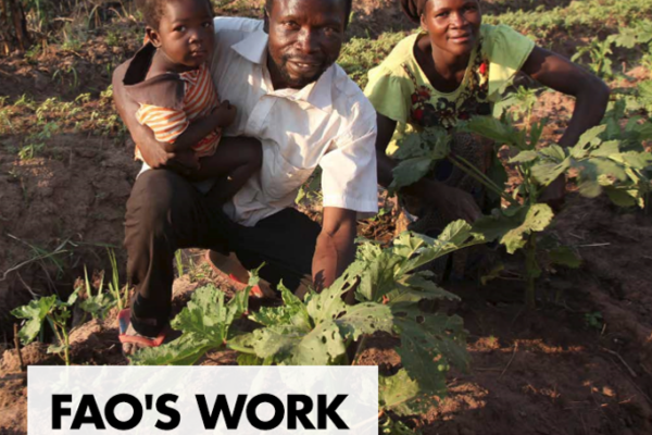 FAO Work on Family Farming