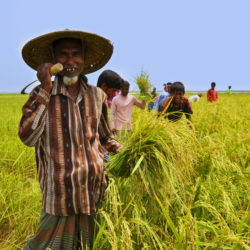 Mobile phone's usefulness among farmers in Southern Bangladesh