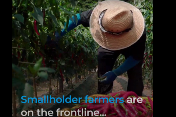 6 ways countries can support smallholder farmers during pandemic