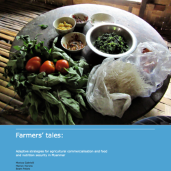 Adaptive strategies of smallholder farming households for agriculture commercialization and food and nutrition security in Myanmar