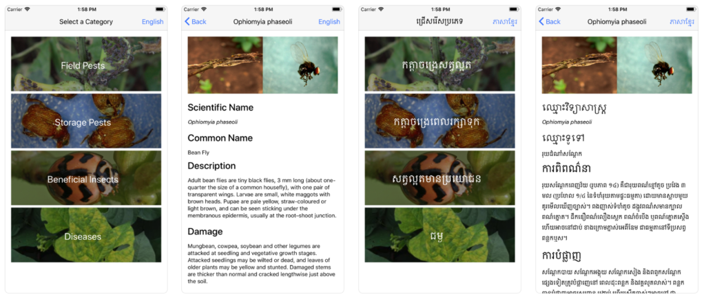 Mobile phone application for pest identification in Northwest Cambodia