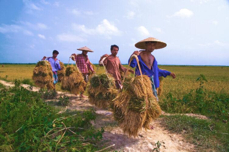Exploring Television as Medium for Rural Development in Bangladesh