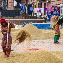 CSA shows potential to help women farmers in Nepal