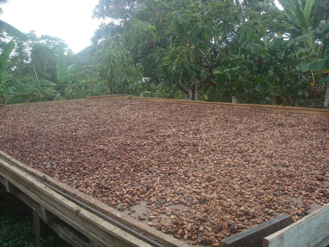 Private Sector Partnership to Boost Inclusive and Sustainable Cocoa Production of Smallholder Farmers in Papua New Guinea
