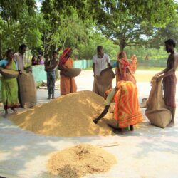 Mobile Phone Use in Agricultural Information in Bangladesh
