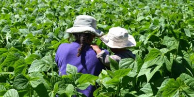 FAO to hold UNDFF Event on Resilient and Sustainable Food Systems