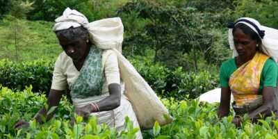 Radio+ increased mobilization of agricultural knowledge in Sri Lanka